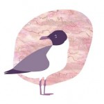Laughing Gull, Birds of the Northeast, credit, collateral